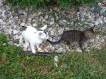 Kitties Exploring
